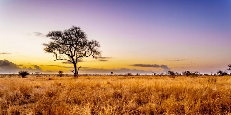 Kruger Enquiry Photo