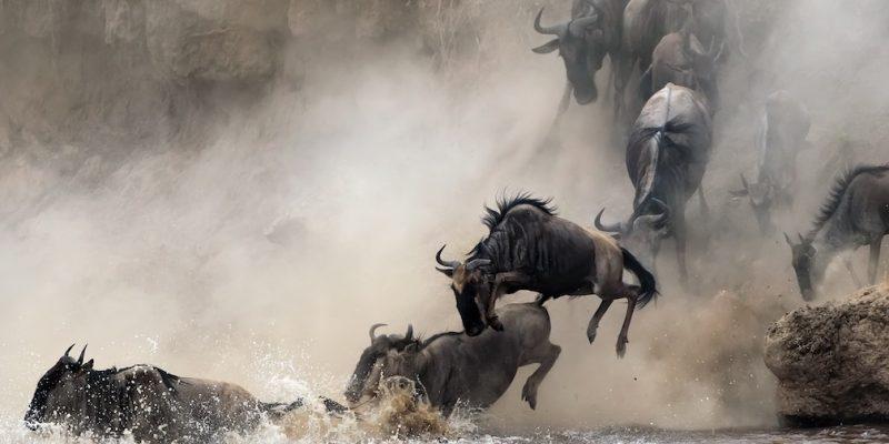 Serengeti Enquiry Photo