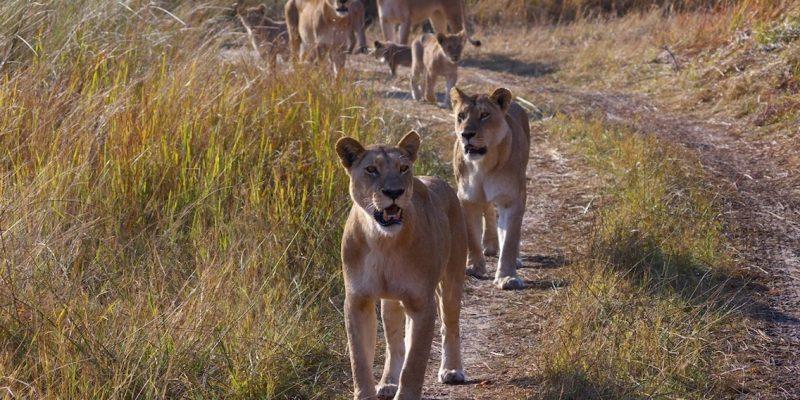 Botswana Banner Photo
