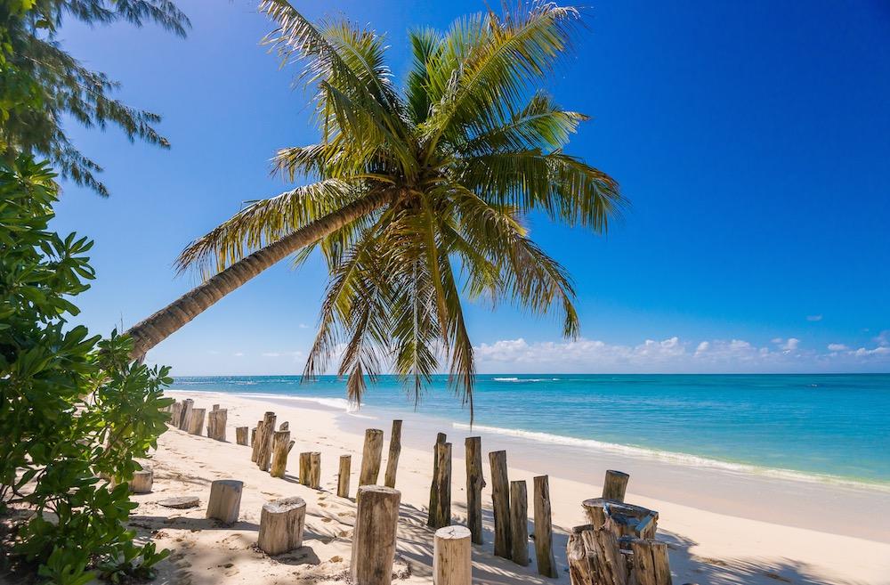 Denis Private Island Palm Tree