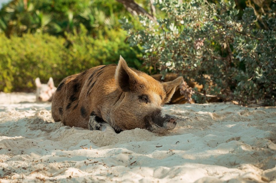 Swimming with pigs and visiting the Bahamas