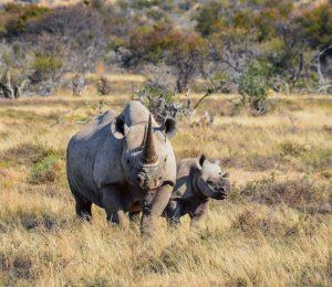Safari Holiday Thumbnail