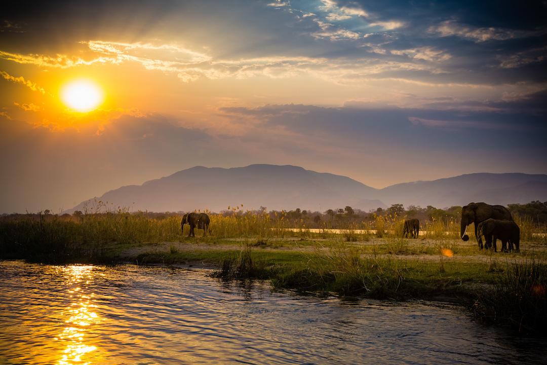 Zambezi Banner Photo