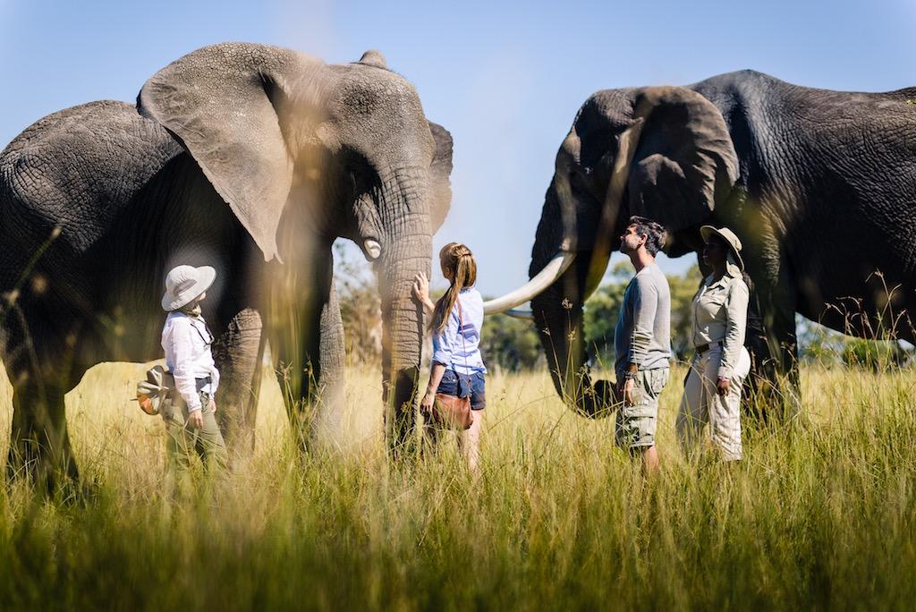 Stanley's Sanctuary Camp Elephants