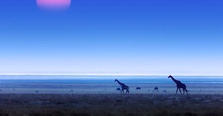 Etosha National Park Compressed Thumbnail