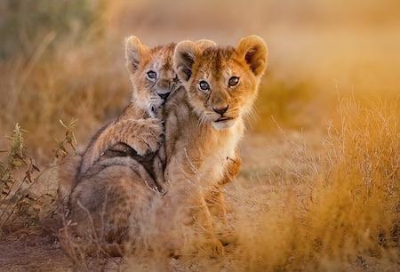 Kruger National Park Thumbnail Compressed