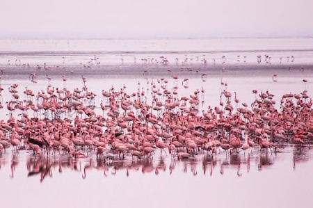 Lake Manyara and Victoria Compressed Thumbnail copy