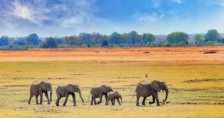Luangwa Valley Compressed Thumbnail copy