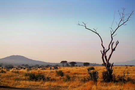 Ruaha National Park Thumbnail Compressed copy