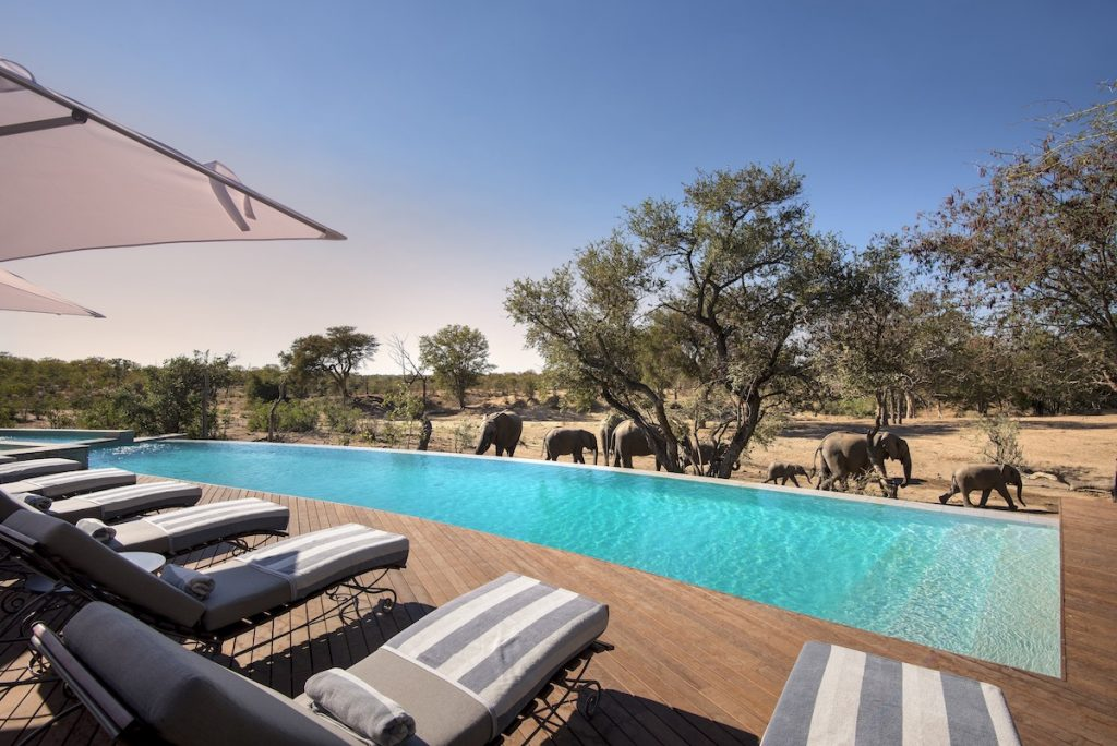 &Beyond Ngala Safari Lodge Swimming Pool