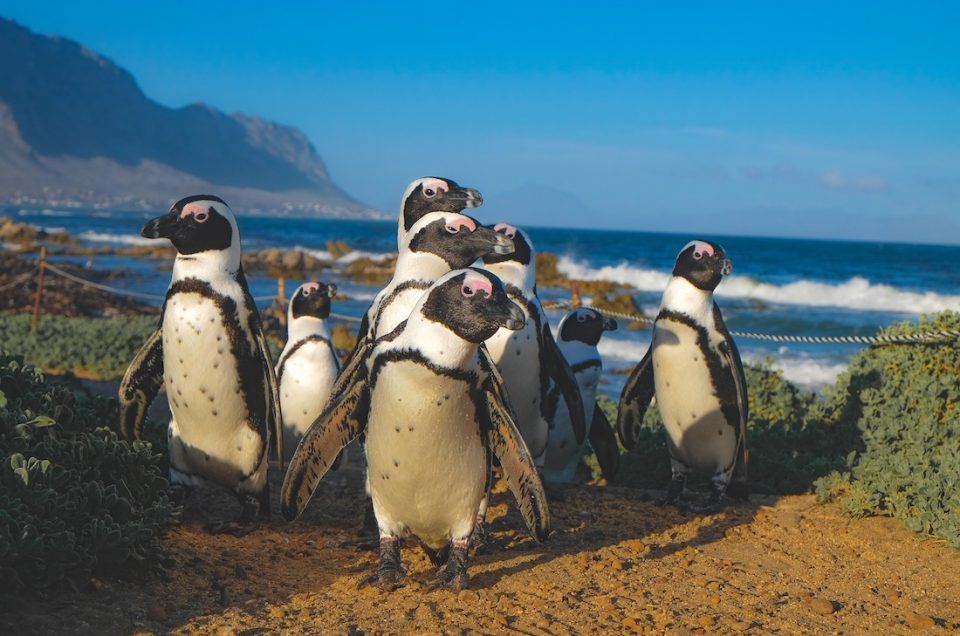Why South Africa is our top safari destination